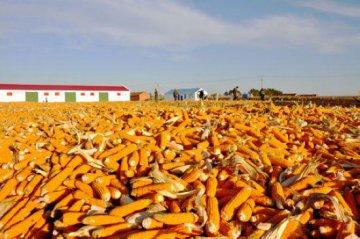 【分析報告】陝北機械化推進糧食作物生產前景廣闊有待扶持