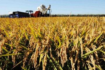 【分析報告】資訊化成為農業發展新趨勢 政策和投入力度需加大