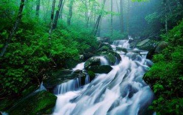 中國大小興安嶺、長白山林區天然林全部停伐