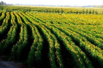 福建最大光伏農業開發專案將在漳浦投建