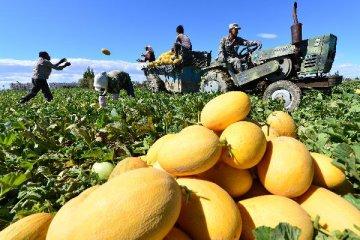 新疆向全国推介特色农产品