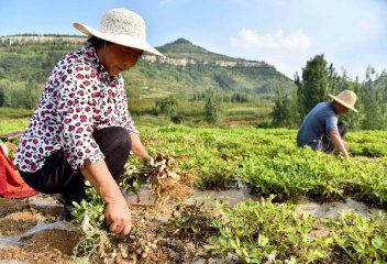 银联卡跨行助农取款已覆盖全国八成行政村
