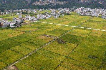 四部門發文推進現代農業示範區建設