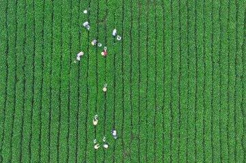 分析报告:外资银行进军中国乡村 带来国际经验注重可持续