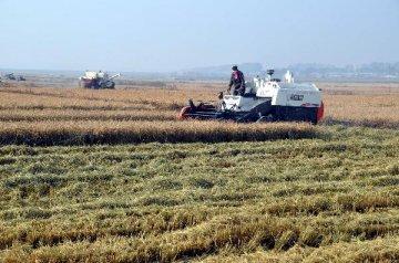 分析报告:农民合作社多举措创新促发展