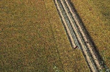 農村一二三產業融合發展政策有望年內出臺