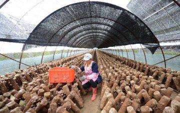 分析報告:深改組通過農墾改革發展意見 改革大幕即將開啟