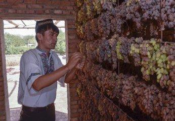 新疆首個特色農產品電商服務園投入運營