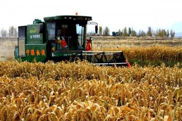 农业十三五主攻现代化 重磅文件年内将出