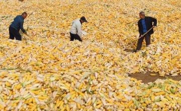 陳錫文:五種因素致當前糧食價格形勢複雜
