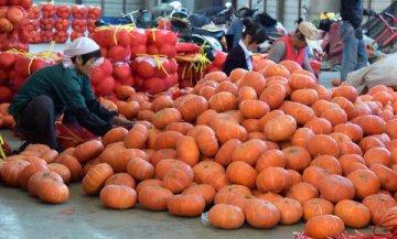 机构:10月份国内消费者非生活必需品支出占比下降