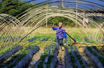 科技部推进十三五农业农村科技创新规划编制