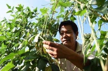 农产品批发市场遭遇业绩下滑困境 业内称目前正是转型升级契机