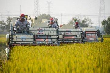 中央指路農墾改革:資產化資本化