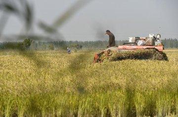 農墾改革啟動國有土地資本化