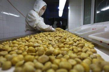 我国农产品加工业产值将突破20万亿元