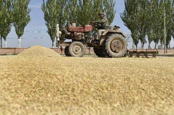 農墾企業混改試點將穩步展開 上市融資力度加大