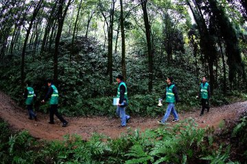 林业局和国开行共同推进国家储备林等领域建设