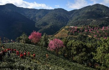 林業局印發儲備林制度方案 正編制儲備林建設規劃