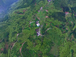 林业发展十三五规划印发 推进林业现代化建设