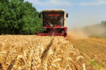 習近平:東北發展規模化經營 農業合作社是方向