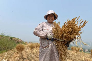 農業部部長韓長賦:深化農村改革 推進農業現代化