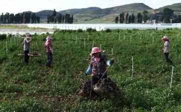 財政部:農業綜合開發要以推進農業現代化為目標