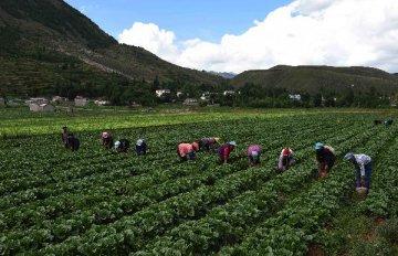 農業部印發農墾改革試點方案 推進國有農場改造