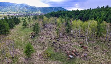 林业局发文推进林业物联网发展 提6大主要任务