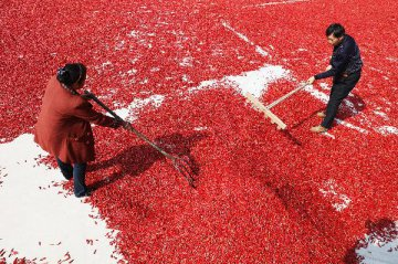 国务院印发全国农业现代化规划 确定五方面发展任务
