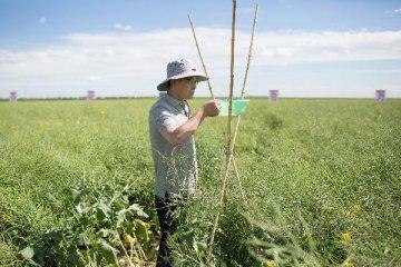 农垦会议下月召开 农业供给侧改革紧盯四主线