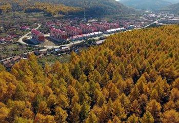 国务院完善集体林权制度 推进林权抵押贷款