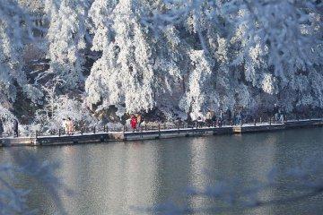 春雪润庐山