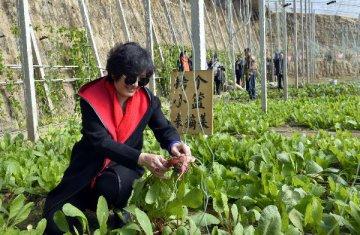 一二三产业新融合 农业供给侧改革加速