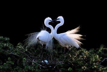 动物也浪漫