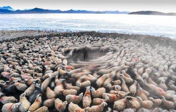 与太阳赛跑的转场——西藏冰湖上的千年牧羊路