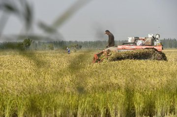 农垦改革现场推进会本周末将召开 相关细则望陆续出台