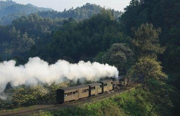 春天,小火车与桐子花有个约会