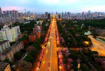 广西柳州:百条街道花成海