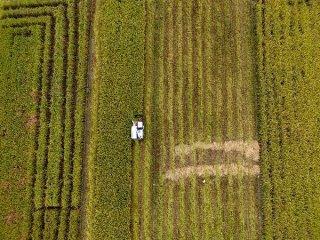 """农业合作正成为""""一带一路""""建设重点领域"""