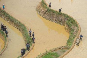 云南红河:又到一年栽秧时