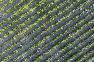 """种植业""""一带一路""""拓展具比较优势 合作市场空间逾5500亿元"""
