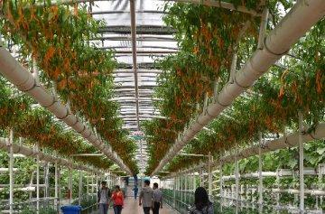財政部:大力推動農業和幸福產業PPP發展