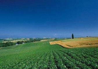 第三次全国土地调查今年启动 将奠定农村土改基础