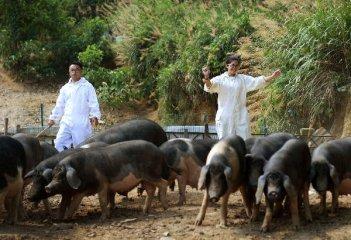 猪价持续反弹 养殖行业利润回升 产业望迎新机遇