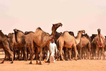 沙特经济多元化举措初见成效