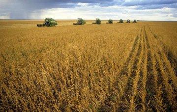 南美匯率波動 吹皺豆市一池春水