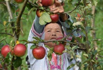 瘋狂的蘋果:120噸交割品攪動2000億現貨市場