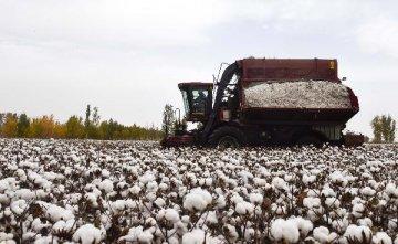 鄭棉跌停 中棉協稱棉花供應不存在短缺問題