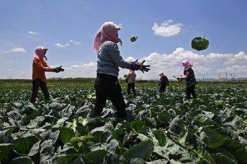 農業農村部:近期蔬菜價格上漲屬於正常的季節性波動 壽光蔬菜受災影響蔬菜有限